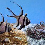 Saltwater aquarium with low nitrites