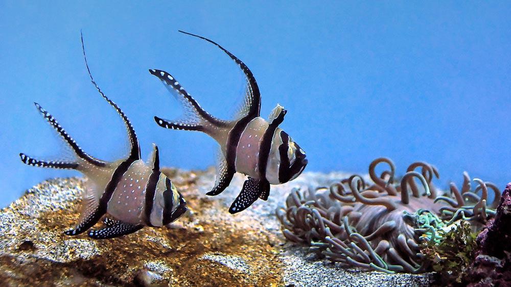 Aquarium tank with reduced nitrites