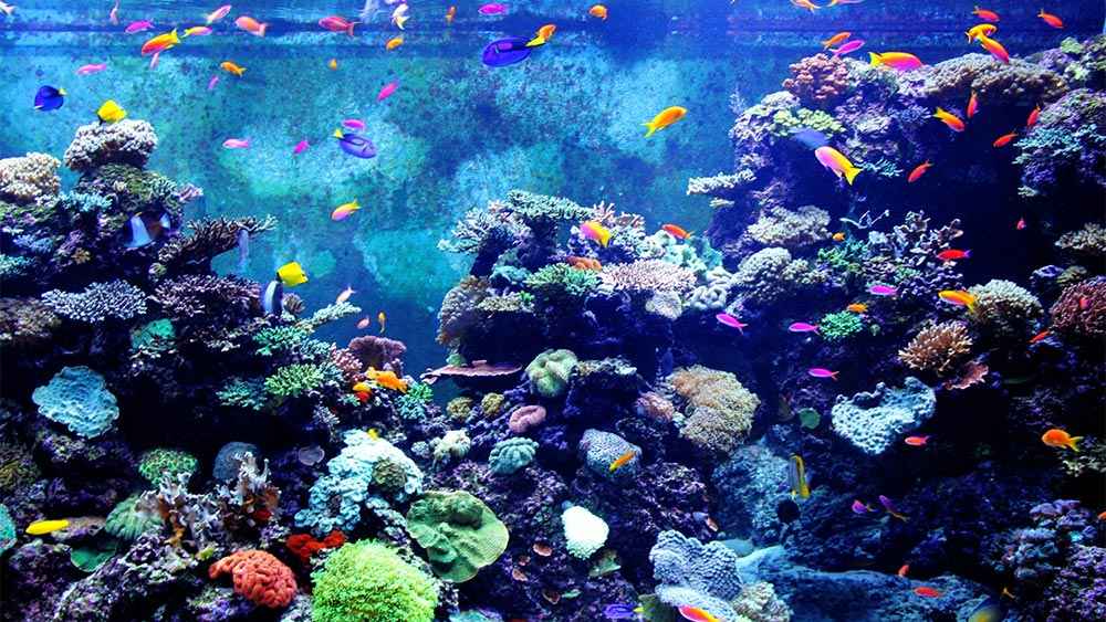 colorful reef tank