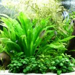aquarium plants that grow in gravel