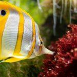 convert freshwater tank to saltwater