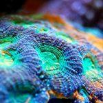 alkalinity in reef tank