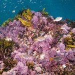 How to remove cyanobacteria
