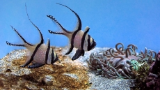 How To Lower Nitrites In Saltwater Aquarium