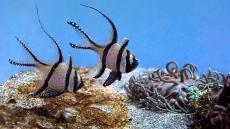 How To Lower Nitrites In Saltwater Aquarium