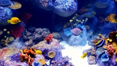 How to Reduce Phosphates in Saltwater Aquariums