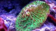 Acclimating Corals In A Marine Tank