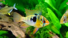 How To Raise KH In Freshwater Aquariums