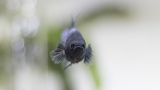 Betta Fish Not Eating? Here's Why