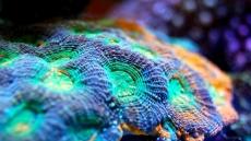 How to Lower Alkalinity in a Reef Tank