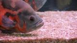 How to Clean Aquarium Sand